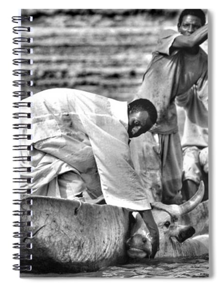 Boat And Cow  Spiral Notebook