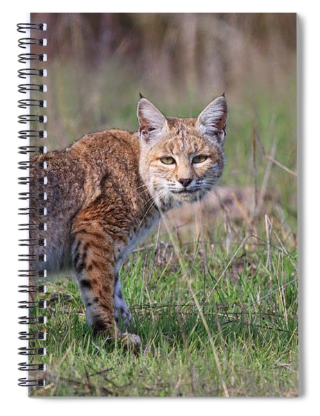 Bobcat Glance Spiral Notebook