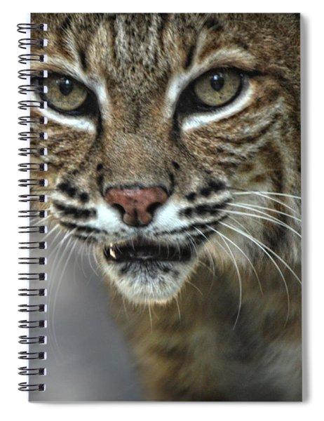 Bobcat Stare Spiral Notebook