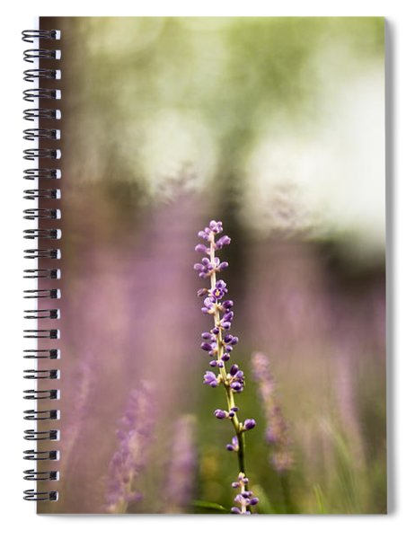 Bokeh With Purple Wildflower Spiral Notebook