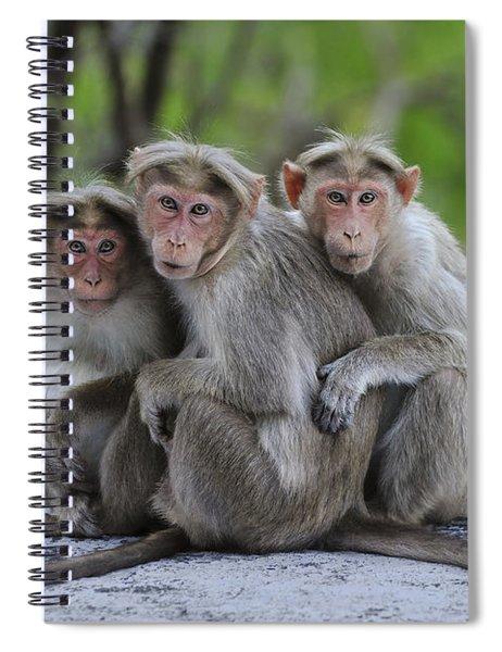 Bonnet Macaque Trio Huddling India Spiral Notebook