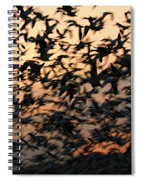 Bosque Sunrise Blastoff Spiral Notebook