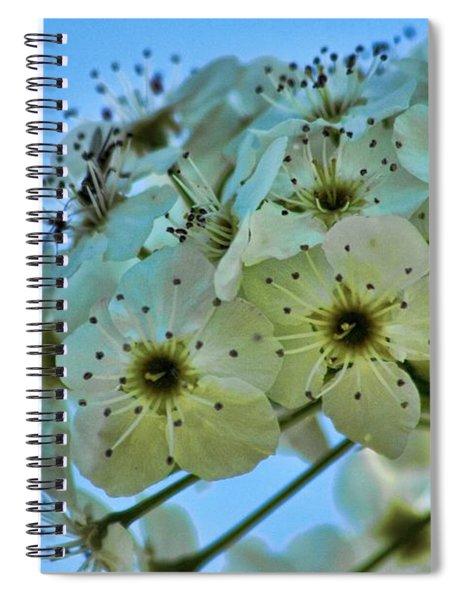 Bradford Pear I Spiral Notebook