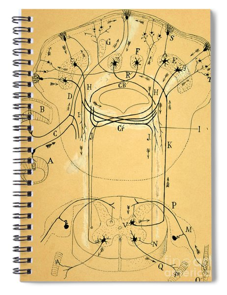 Brain Vestibular Sensor Connections By Cajal 1899 Spiral Notebook