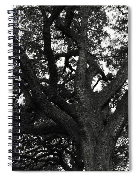 Branches Of Life Spiral Notebook