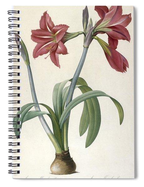 Brazilian Amaryllis Spiral Notebook