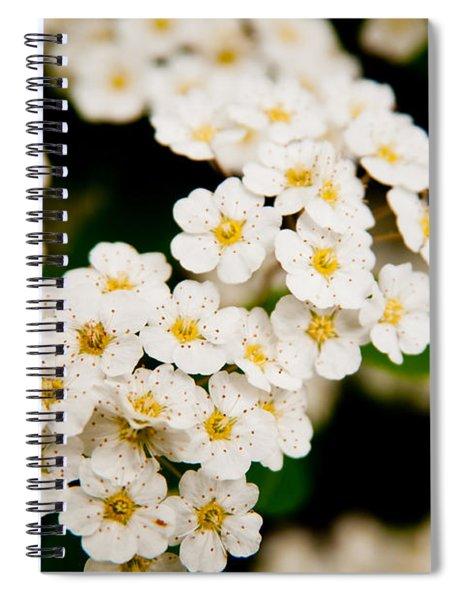 Bridal Veil Spirea Spiral Notebook
