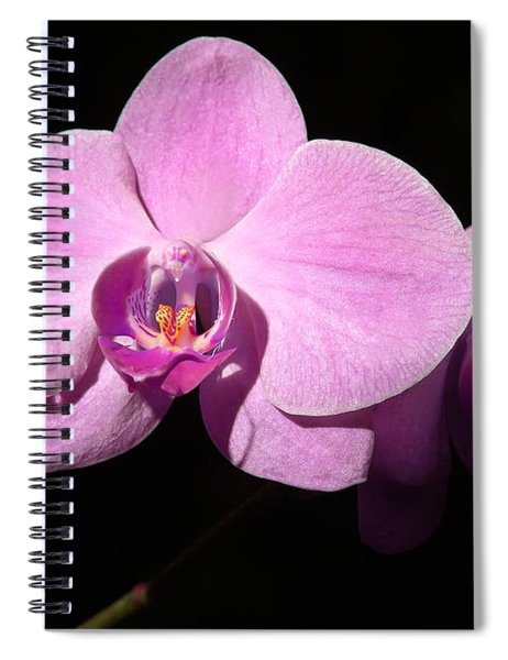 Bright Orchid Spiral Notebook