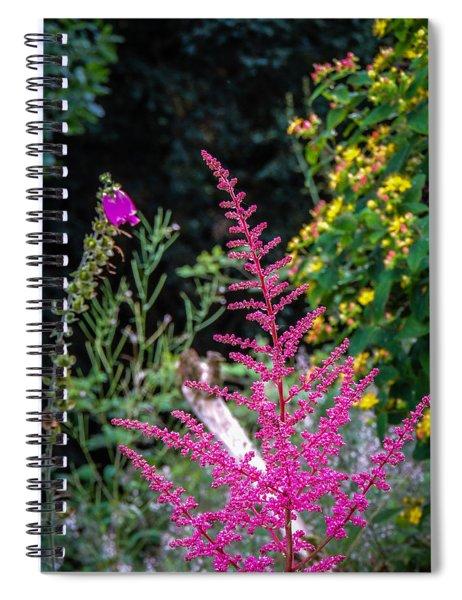 Brilliant Astilbe In Markree Castle Gardens Spiral Notebook