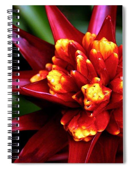 Brilliant Bromiliad Spiral Notebook