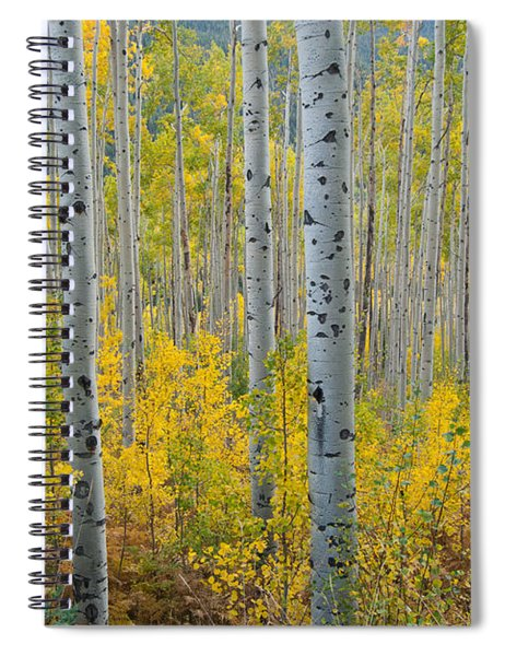 Brilliant Colors Of The Autumn Aspen Forest Spiral Notebook