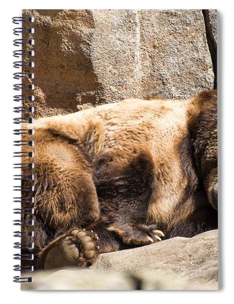 Brown Bear Asleep Again Spiral Notebook