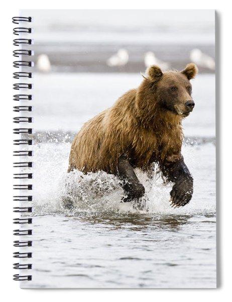 Brown Bear Chasing Salmon Spiral Notebook