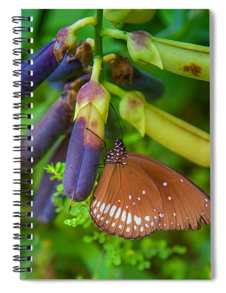 Brown Butterfly In The Green Jungle Spiral Notebook