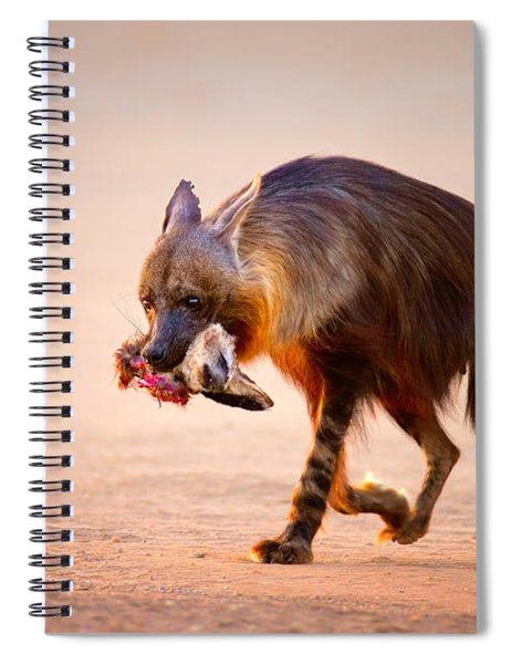 Brown Hyena With Bat-eared Fox In Jaws Spiral Notebook