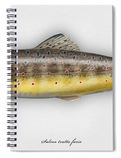 Brown Trout - Salmo Trutta Morpha Fario - Salmo Trutta Fario - Game Fish - Flyfishing Spiral Notebook