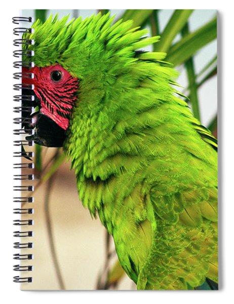 Buffons Macaw, Portrait Profile Spiral Notebook