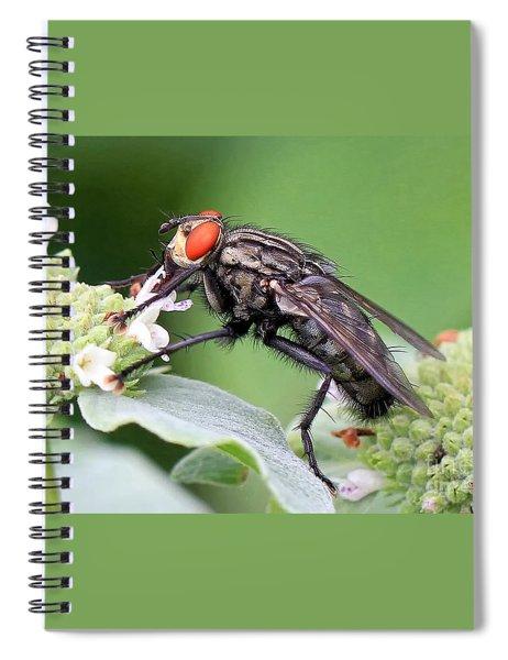 Bugeyed Spiral Notebook