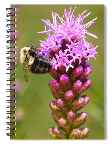 Bumblebee On Dense Blazing Star Spiral Notebook