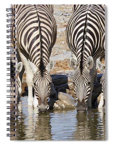 Burchells Zebras Drinking Etosha Np Spiral Notebook