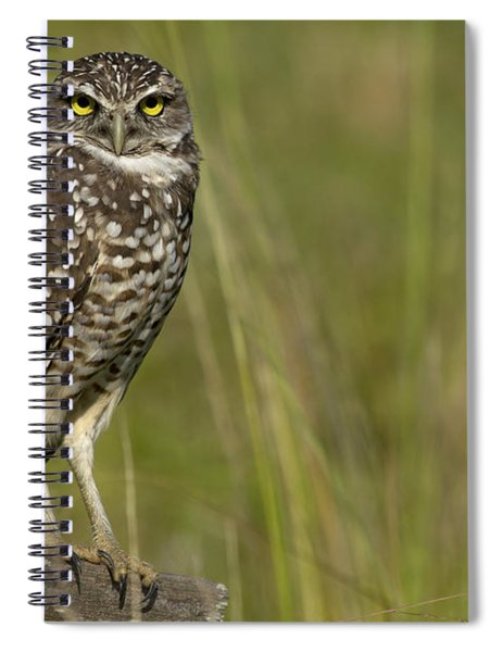 Burrowing Owl Stare Spiral Notebook