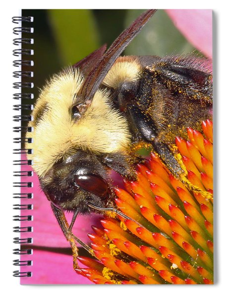 Busy Busy Spiral Notebook