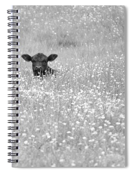 Buttercup In Black-and-white Spiral Notebook