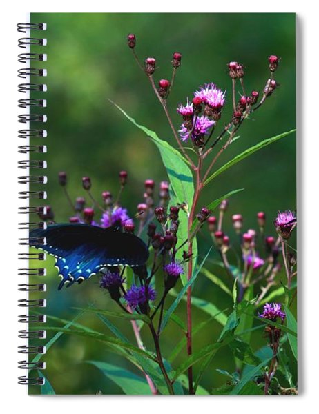 Butterflies Three Spiral Notebook