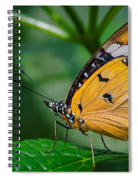 Spiral Notebook featuring the photograph Butterfly  by Garvin Hunter