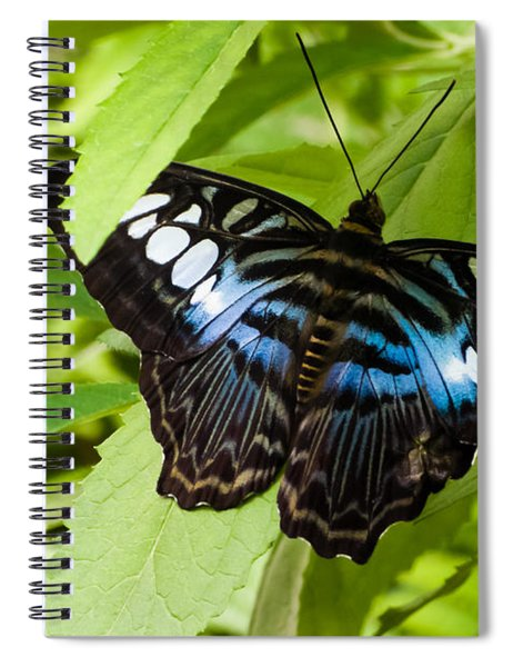 Butterfly On Leaf   Spiral Notebook
