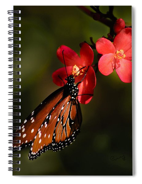 Butterfly On Red Blossom Spiral Notebook