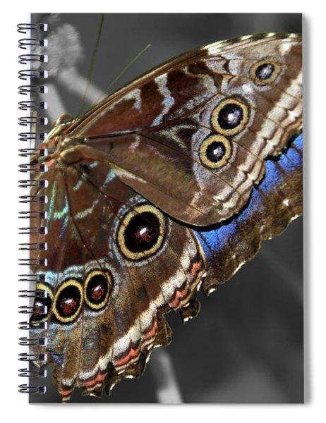Butterfly Spot Color 1 Spiral Notebook