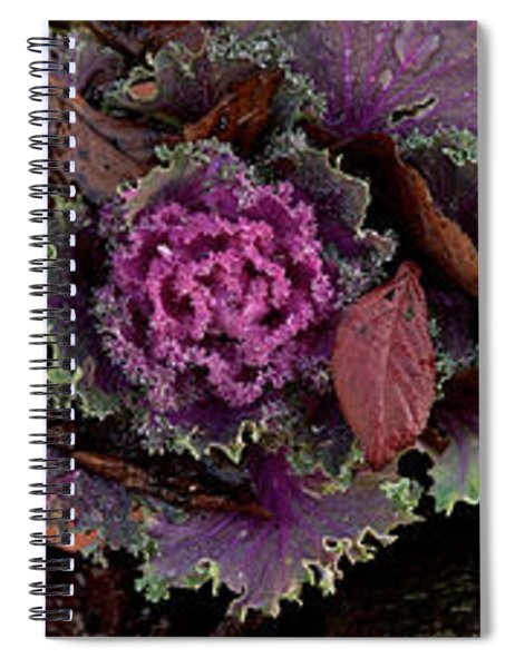 Cabbage With Butterfly Nebula Spiral Notebook