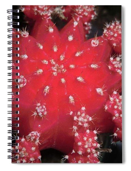Cactus Beauty  Spiral Notebook
