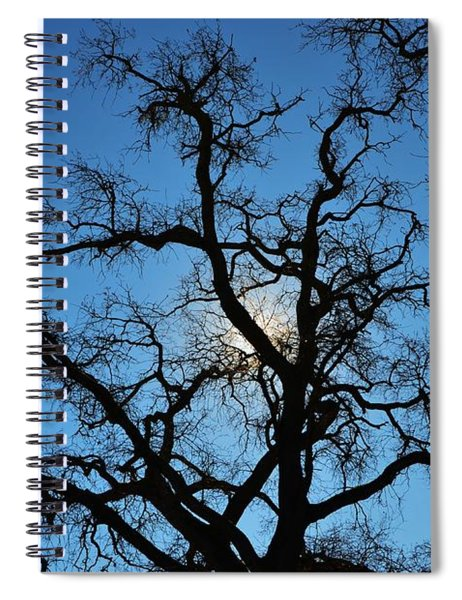 California Oak Sun Tree Spiral Notebook
