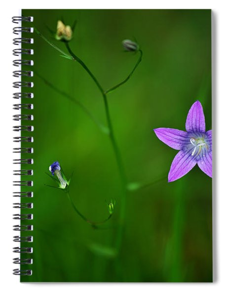 Campanula Patula Spiral Notebook