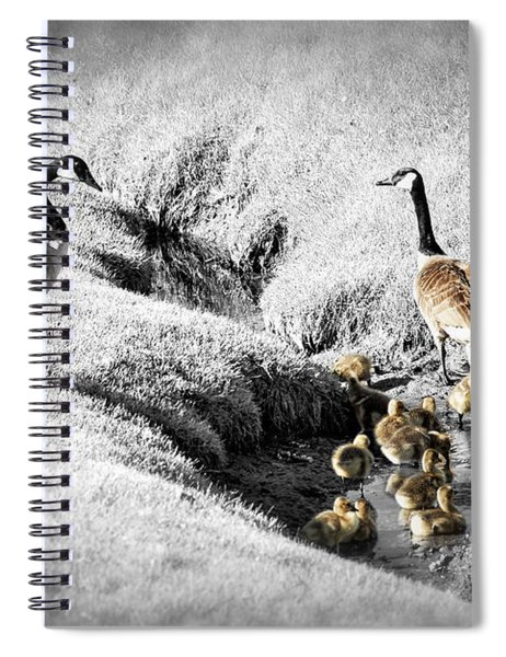 Canada Geese Family Spiral Notebook