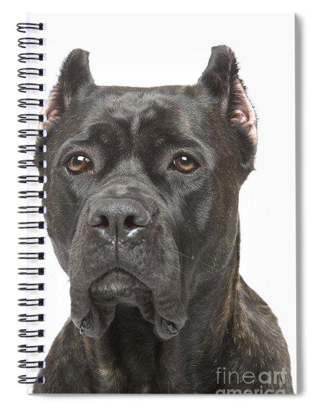 Cane Corso Dog Spiral Notebook