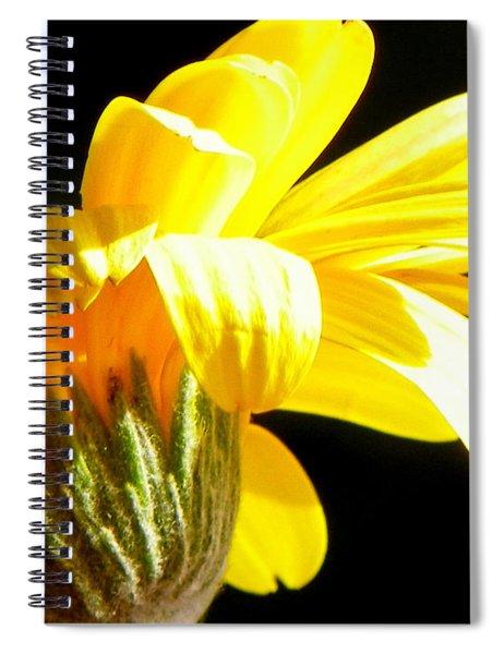 Canopy Of Petals Spiral Notebook