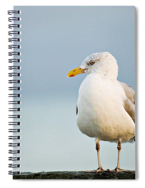 Cape Cod Seagull Spiral Notebook