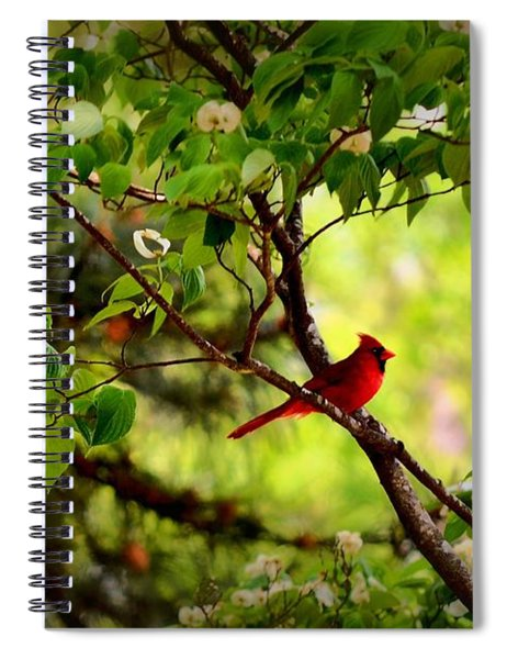Cardinal In Dogwood Spiral Notebook