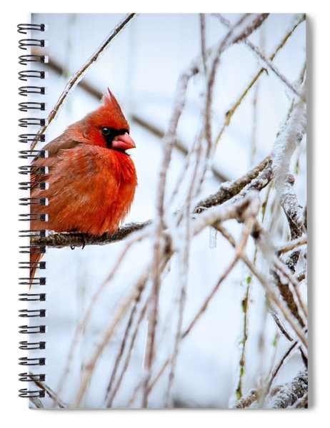 Cardinal In The Willow IIi Spiral Notebook