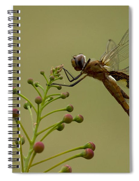Carolina Saddlebags Spiral Notebook