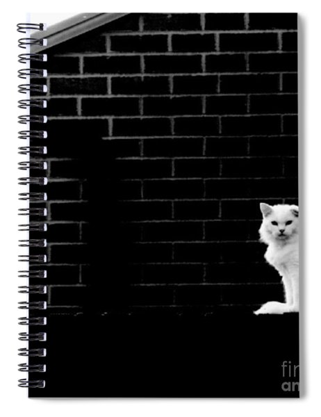 Cat With The Floppy Ear In Black And White Spiral Notebook