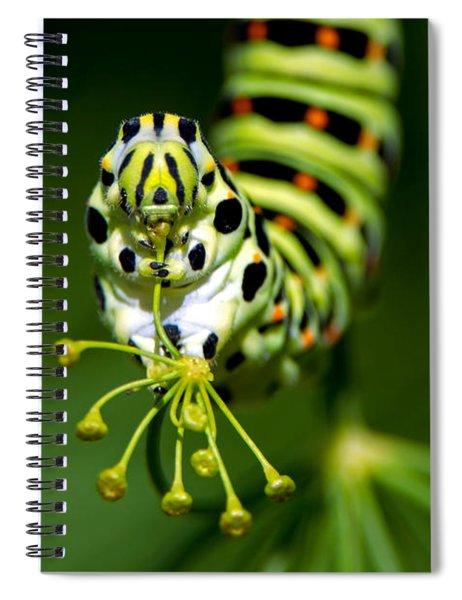 Caterpillar Of The Old World Swallowtail Spiral Notebook