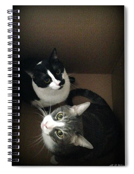 Tabby Cat Kitten Photography Pets  Spiral Notebook by Ai P Nilson