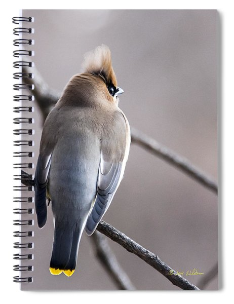 Spiral Notebook featuring the photograph Cedar Waxwing  by Edward Peterson