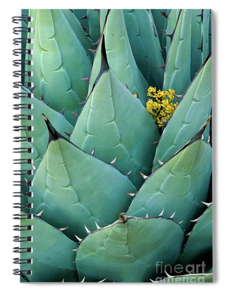 Century Plant And Tiny Blossom Spiral Notebook