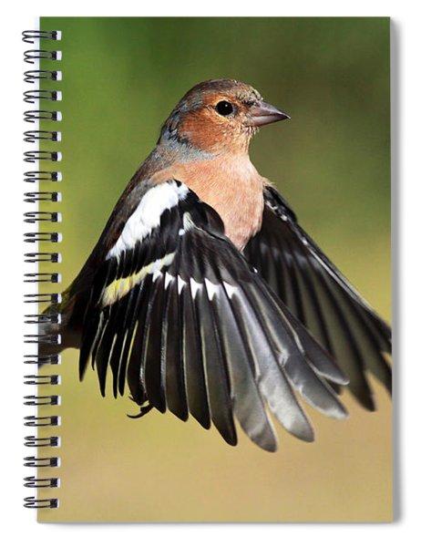 Chaffinch In Flight Spiral Notebook