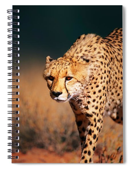 Cheetah Approaching From The Front Spiral Notebook